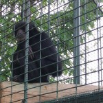 darica-goril